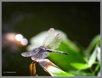 Dragonfly with bokeh by Mogrianne