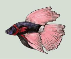 Empress... Betta by VolatileFortune