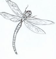 dragonfly by embryo-spark