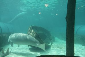 dugong and wreck 5027 by fa-stock