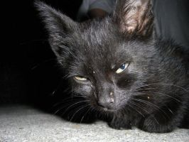 Evil kitty:P by ChesneyCat