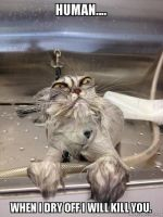 Bathed cat. by Hellomon100