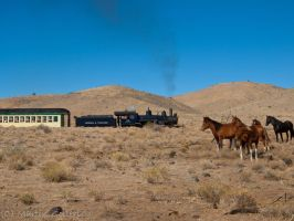 Wild  Horses and Steam Train 4 by MartinGollery