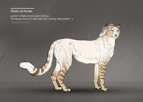 Shedu cat female 168 by Templado