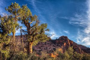 Along Canyon Overlook by eprowe