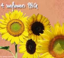 sunflowers PNG by Brilijah