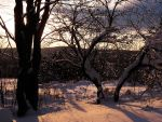 Winter Forest Stock 2 by HOTNStock
