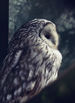 Owl. by FSGPhotography
