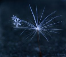Frozen Beauty II by Kittyoholic