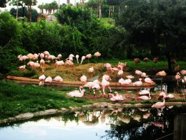 Flamingos by the Lake by Youjeen