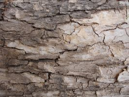 Wood Bark 02 by ShadowRunner27