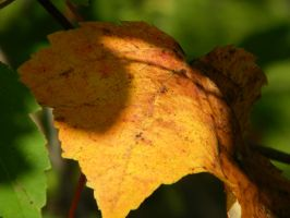 Fall Colors .. Lone leaf by TinkerBeIIe143