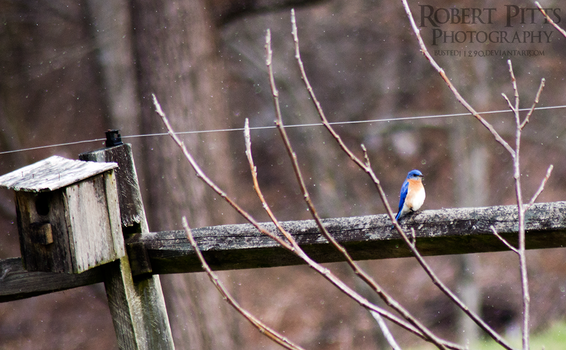 Bluebird by Busted11290