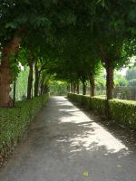 pathway under trees by mimose-stock
