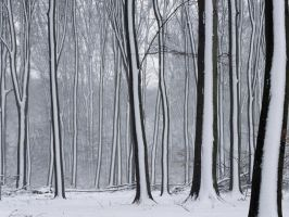 Bigpreview Snow Covered Forest Wallpaper by darkadathea