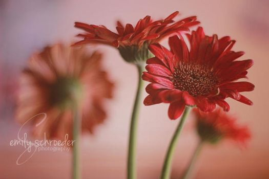 Natures Beauty No 2 by emily0690