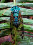Fredrick the Painted Cicada by OliverTheWanderer
