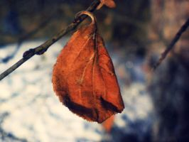 Red winter leaf. 01 by abbeyagraves