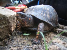 Turtle at the Worksite by Ashere