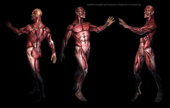real-time anatomy by mojette