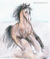 Arabian Horse by Mimose91