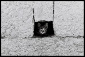 Cat wall by Zeljana