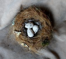 Replica azure-winged magpie nest and eggs by lupagreenwolf