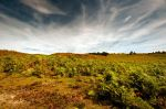 The New Forest by Dave-Ellis
