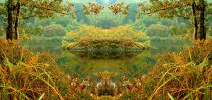 Psychedelic Nature by scotto