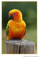 Parrot by MarjoleinART-Photos