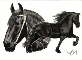 Friesian Tribute by LindaColijn