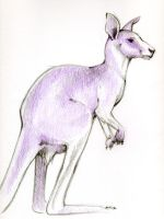 Purple Kangaroo by kobayashi