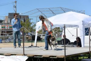 2014 Dog Festival, Best Trick Contest by Miss-Tbones