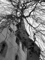 Solitary tree near the tower by 23FeetUnder