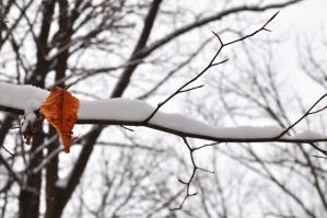 Last Gasp of Fall by Luckyebbie