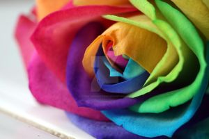 Bright and colourful by Gothic-Enchantress