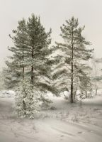 Pale winter by xrust