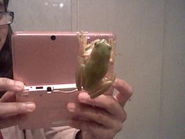 REAL FROG !!!! by HOBYMIITHETACTICIAN
