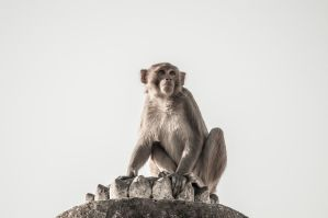 Holy monkey by PasoLibre