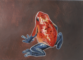 aceo Oophaga pumilio by kailavmp