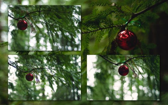 Forest Ornament Wallpapers by solefield