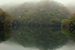 the mirrored forest by rayna23