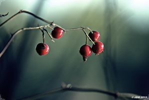 Autumn Berries by JDM4CHRIST
