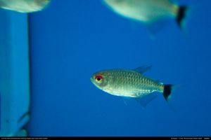 Fish Stock 0009 by phantompanther-stock