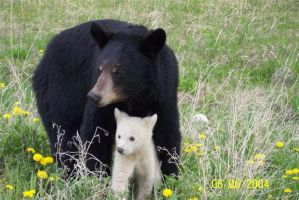 Black Bear, White Cub by Kish-DazedNConfused