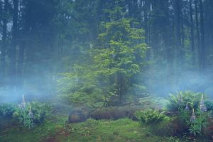 Blue forest by CAStock