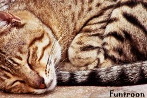 The Need Of Sleep. by FunTroon