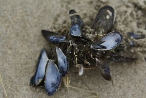 mussels by marob0501
