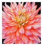 Dahlia in watercolor by rosalinvinci