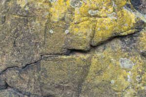 Rock Texture 01 by goodtextures